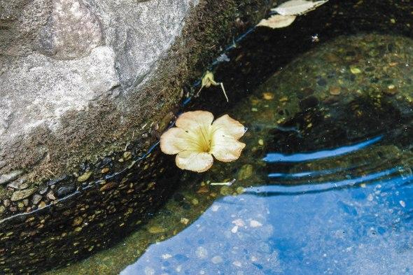 Taken in Japan