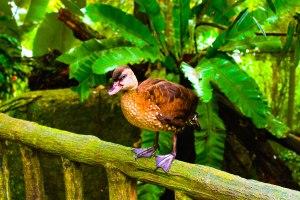Taken in Singapore Zoo
