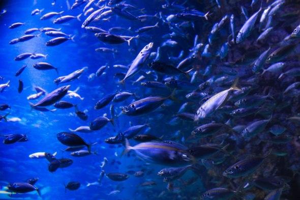Taken at an Oceanarium, in Singapore