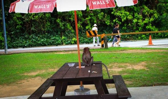 Taken in Sentosa, Singapore