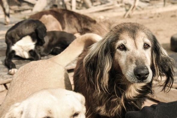 Taken at the dog shelter in Lebanon