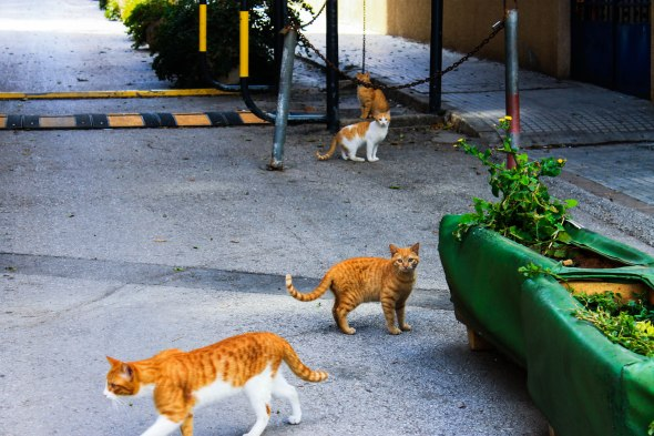 Taken in Beirut, Lebanon