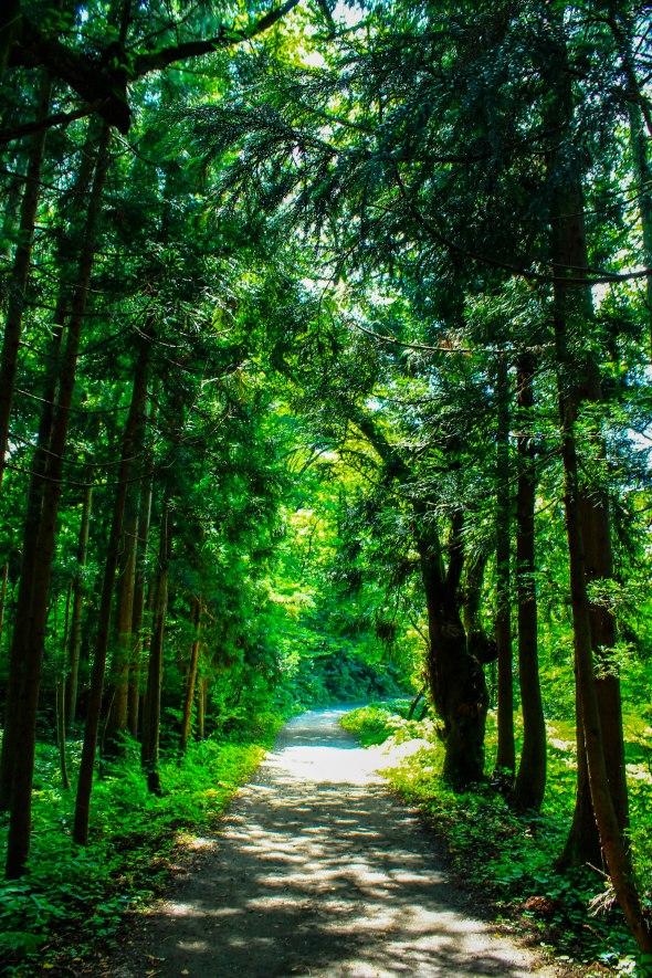 Taken in Niigata, Japan