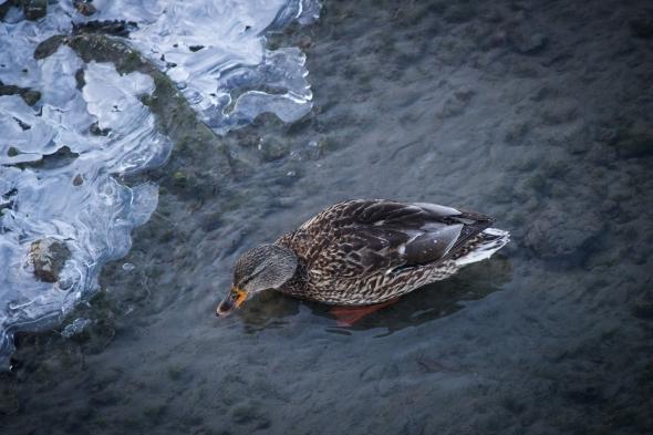 Taken in Kamloops, BC, Canada